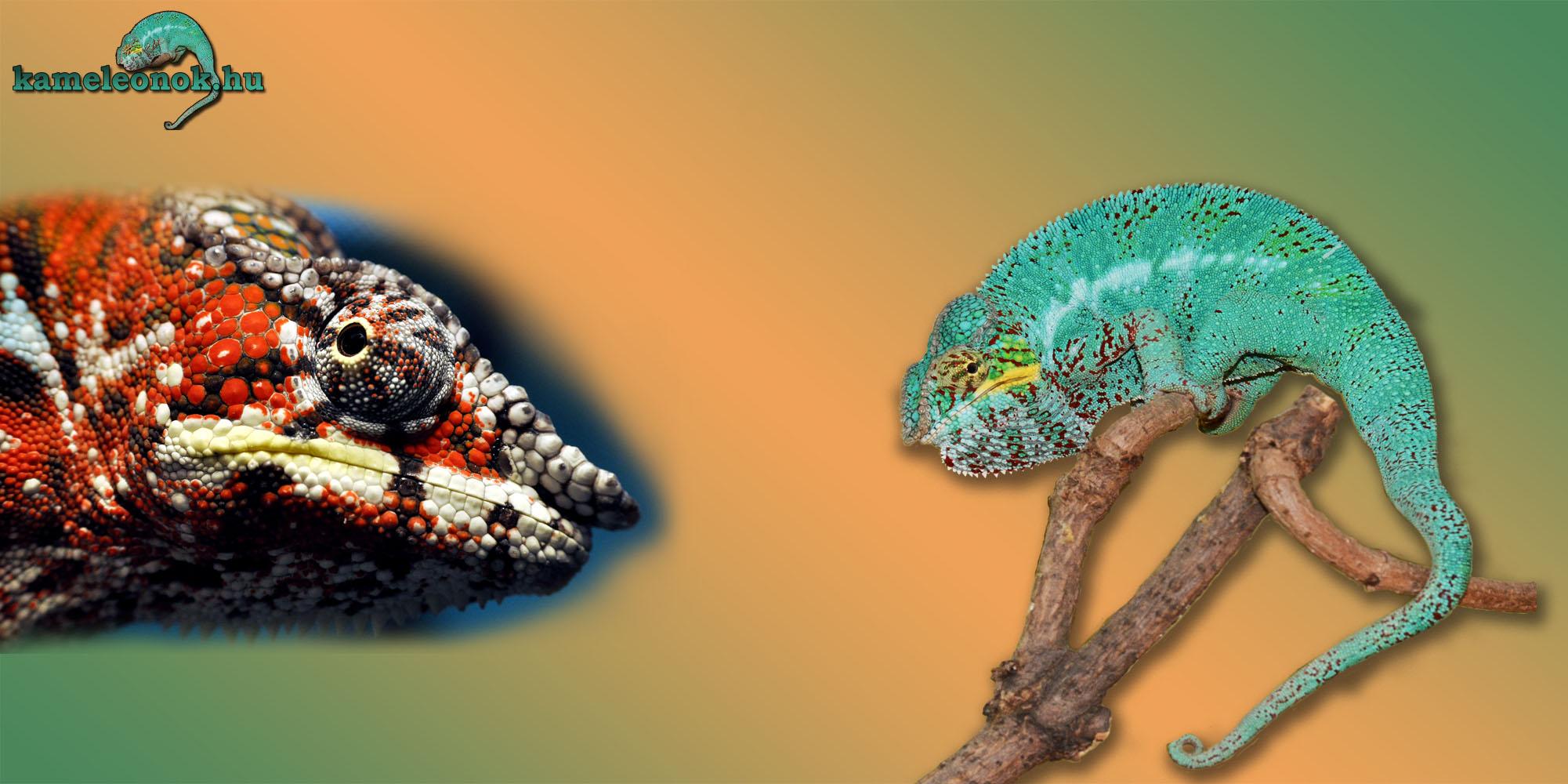 paraziták és kaméleonok